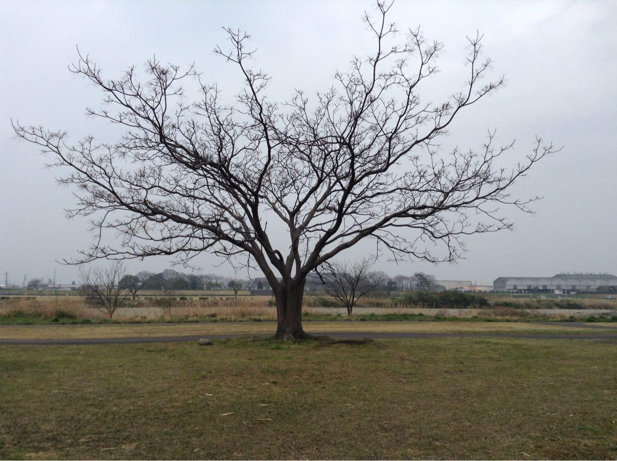 一本の大きな木がある