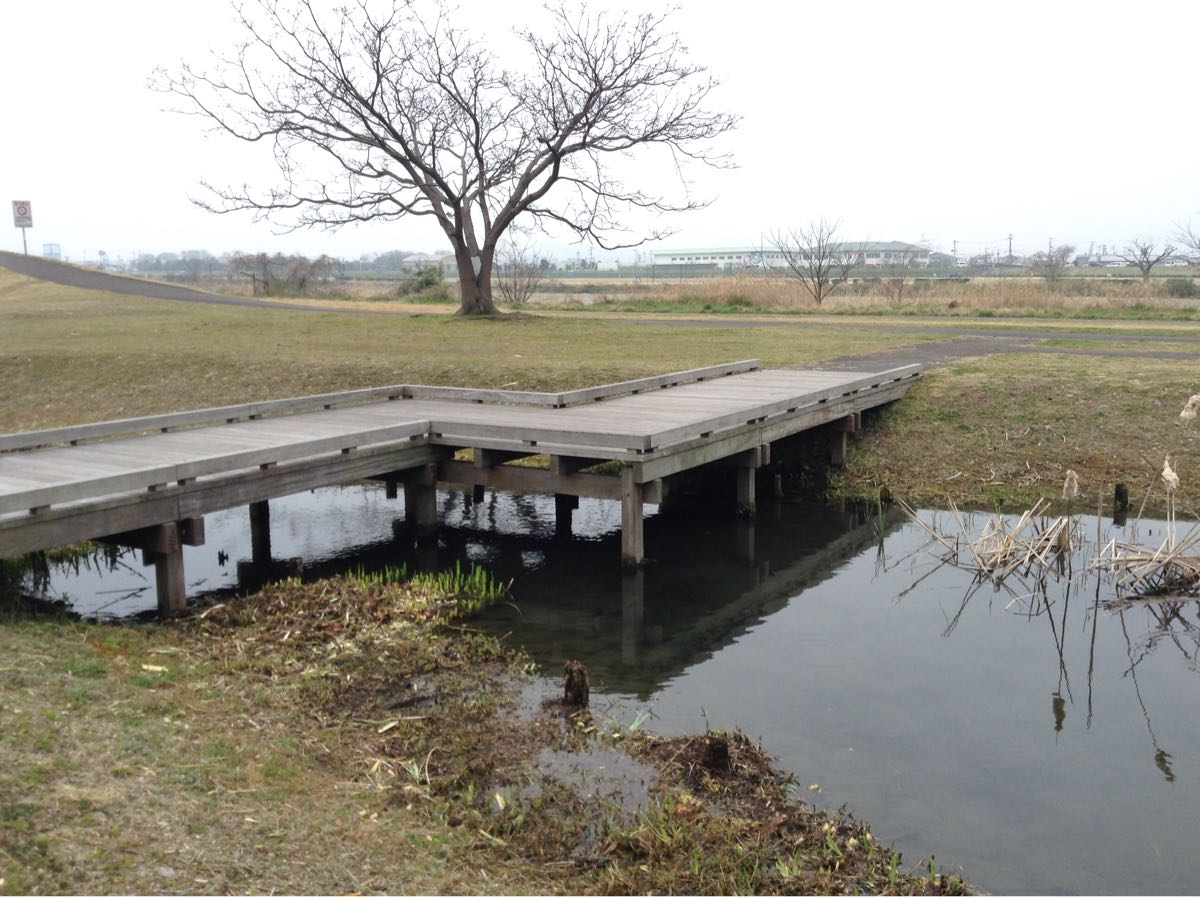 こっちの池にも橋があるよ