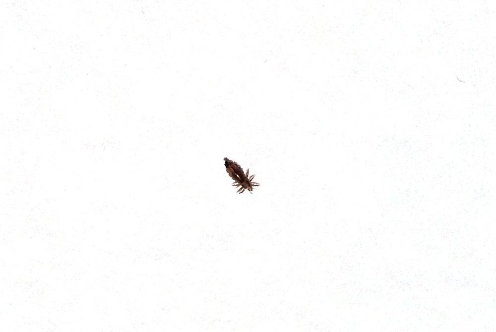 こんな虫が頭から落ちてきた