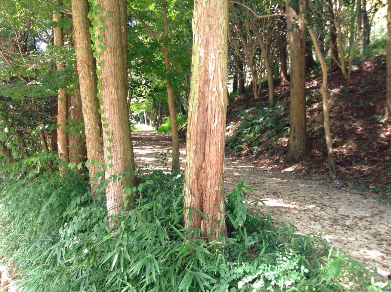 森林散策しながらも