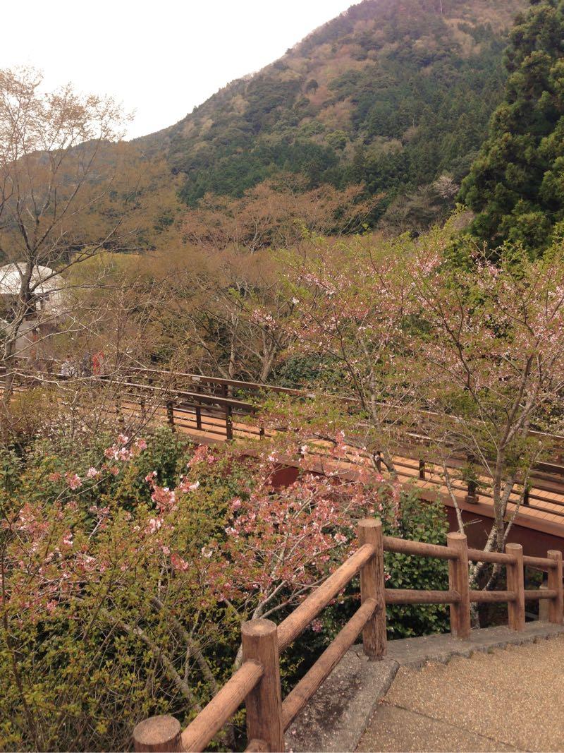 道の駅新宮から道路を渡ると川と橋があります