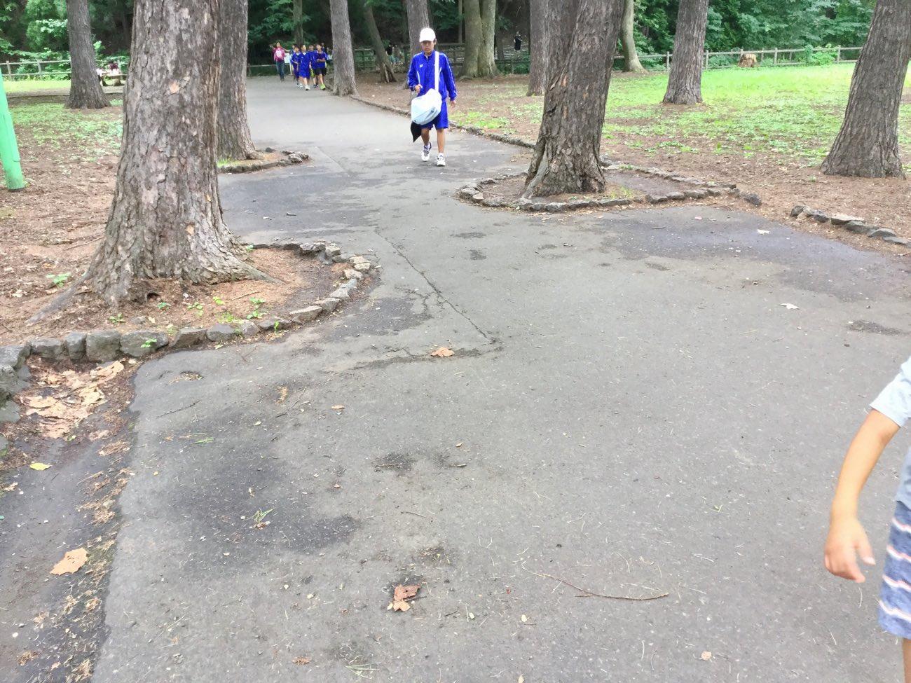 木を避けて道路を作っている