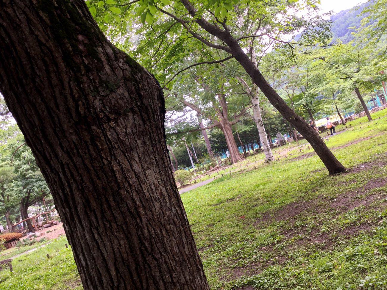 円山公園は木ばっかし