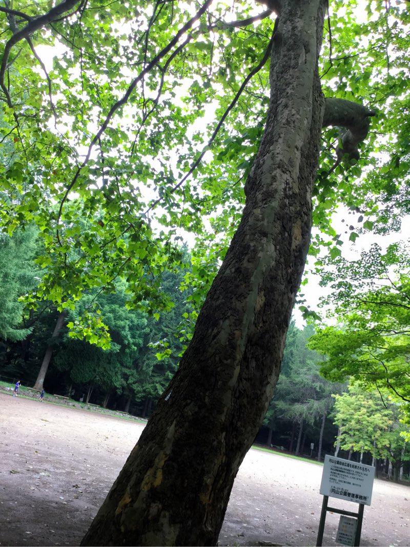 葉っぱが透き通って綺麗な木の写真