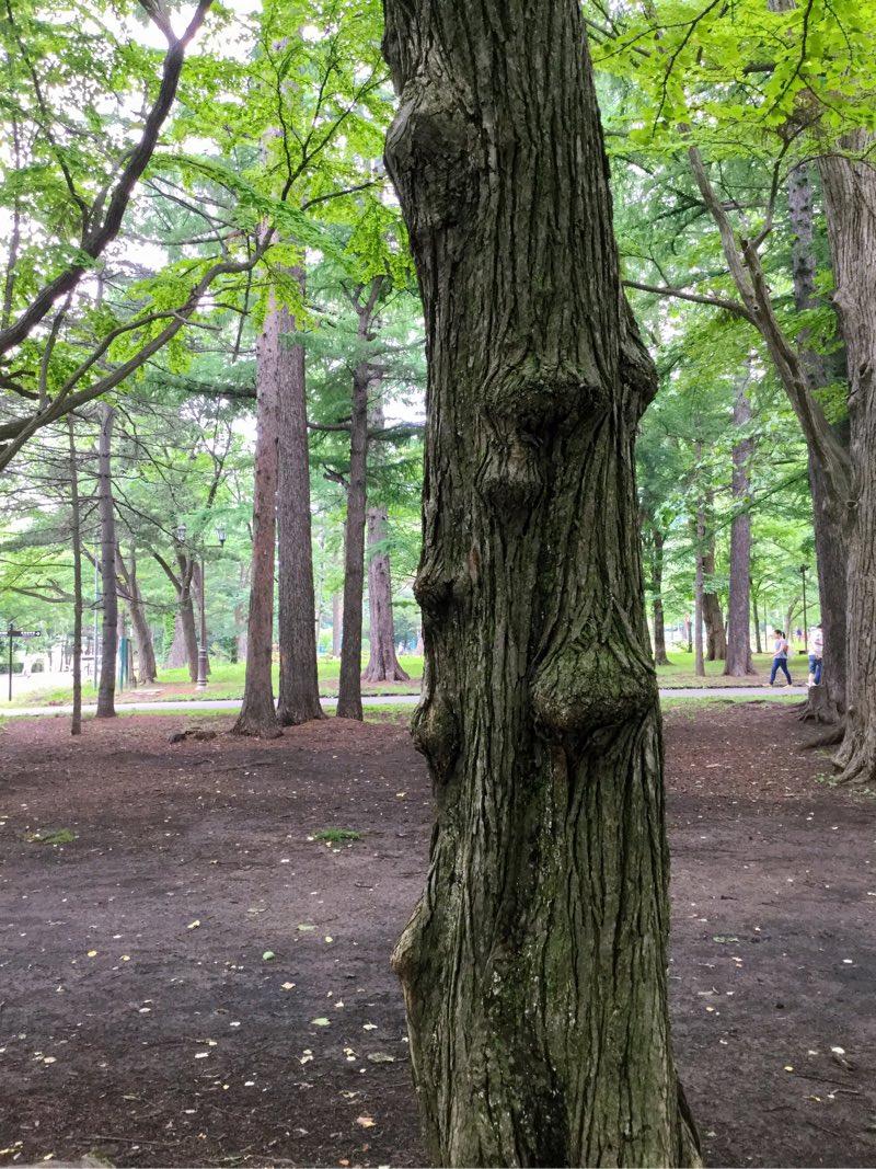 こぶだらけの木