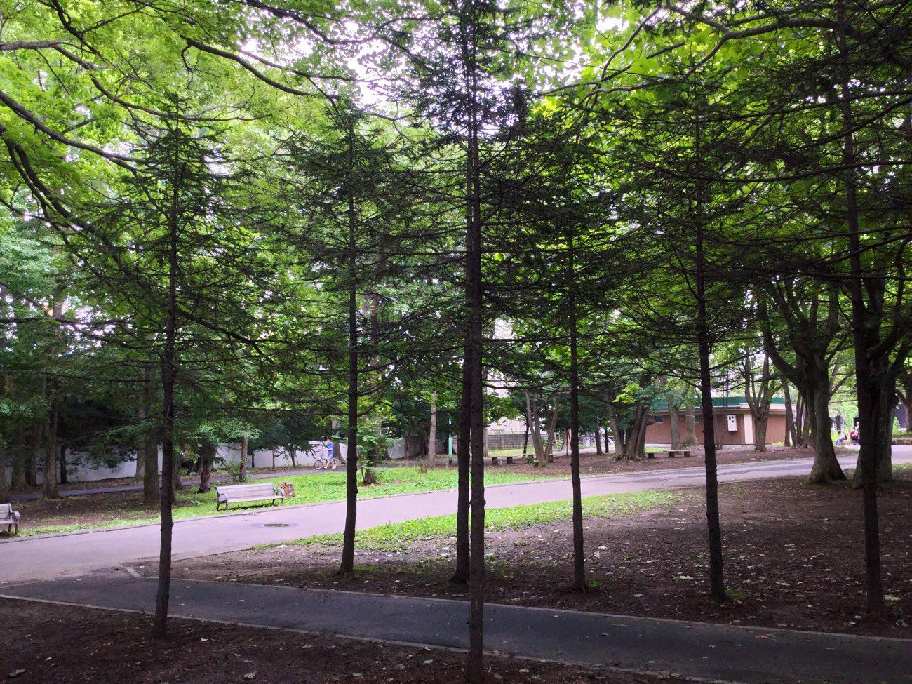 針葉樹っぽい木