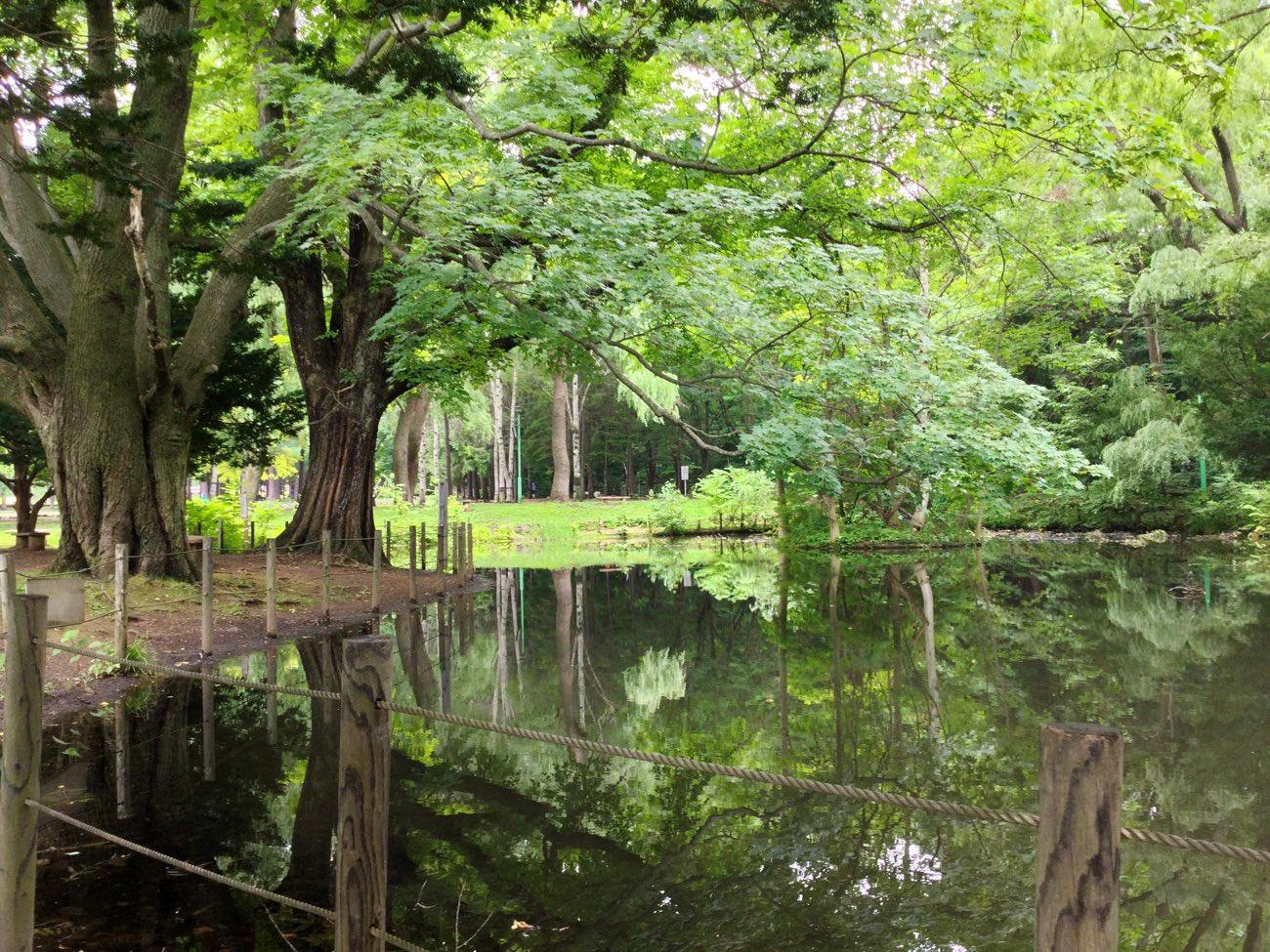 円山公園の池のある風景