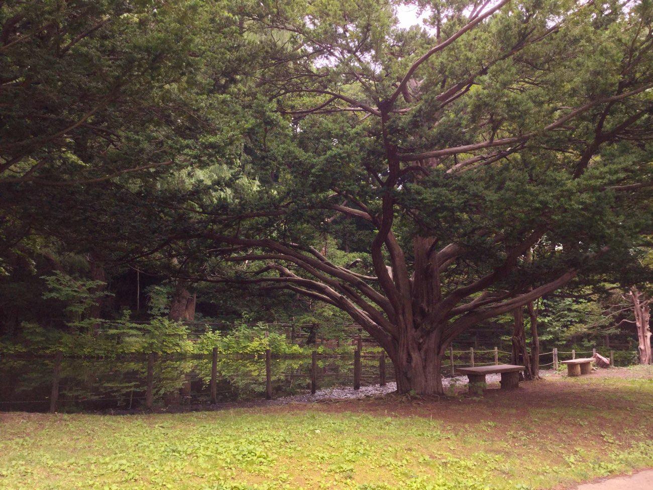 幹の下の方から枝が広がっている木