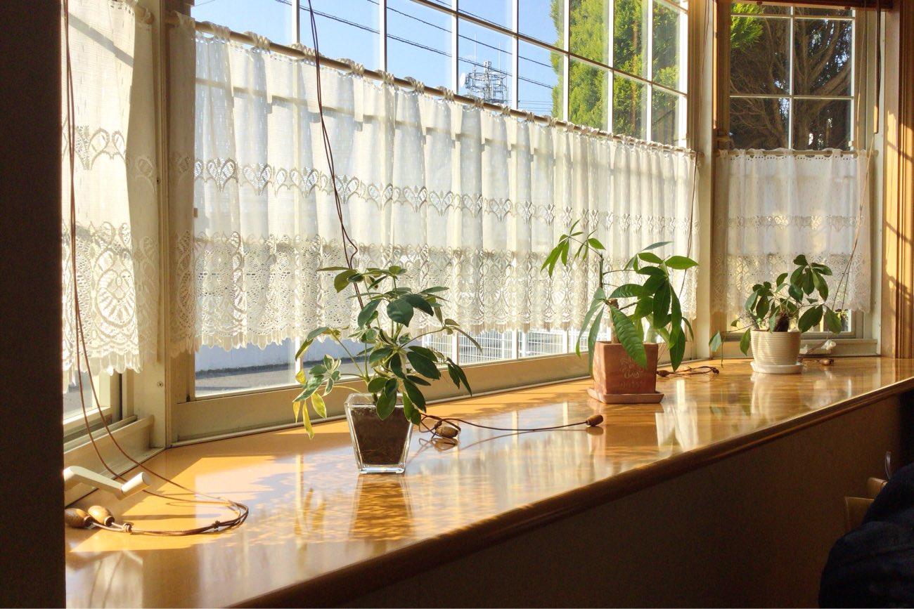 窓際には植物もあります
