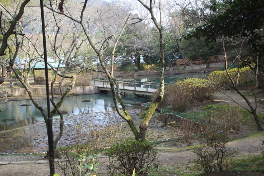祓社の裏にある「浄の池」