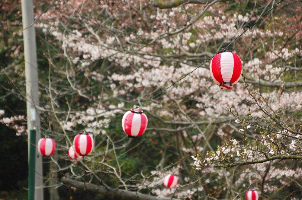 花見の季節にはちょうちんが