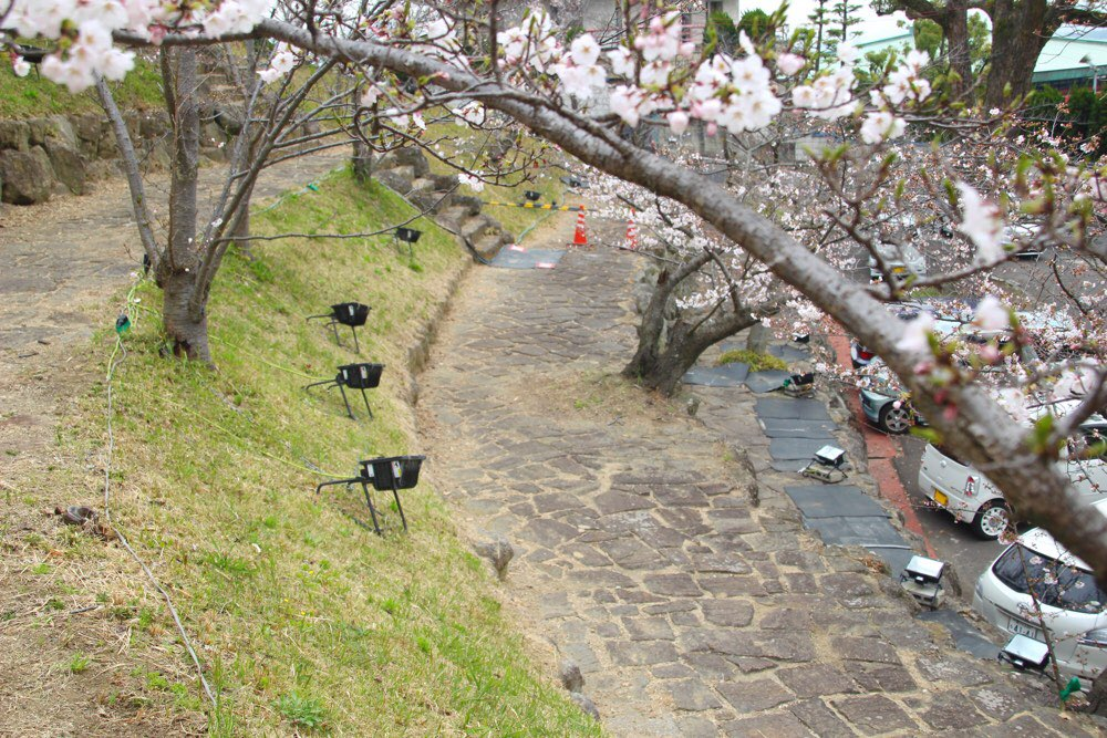 コンコース広場の夜桜はいいよ