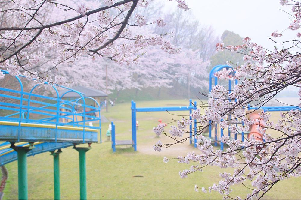 ちびっこ広場も桜でいっぱい