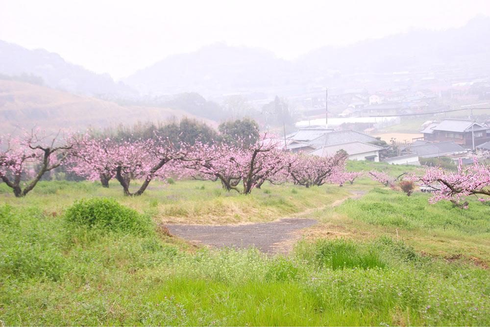 後ろに桃の花がある