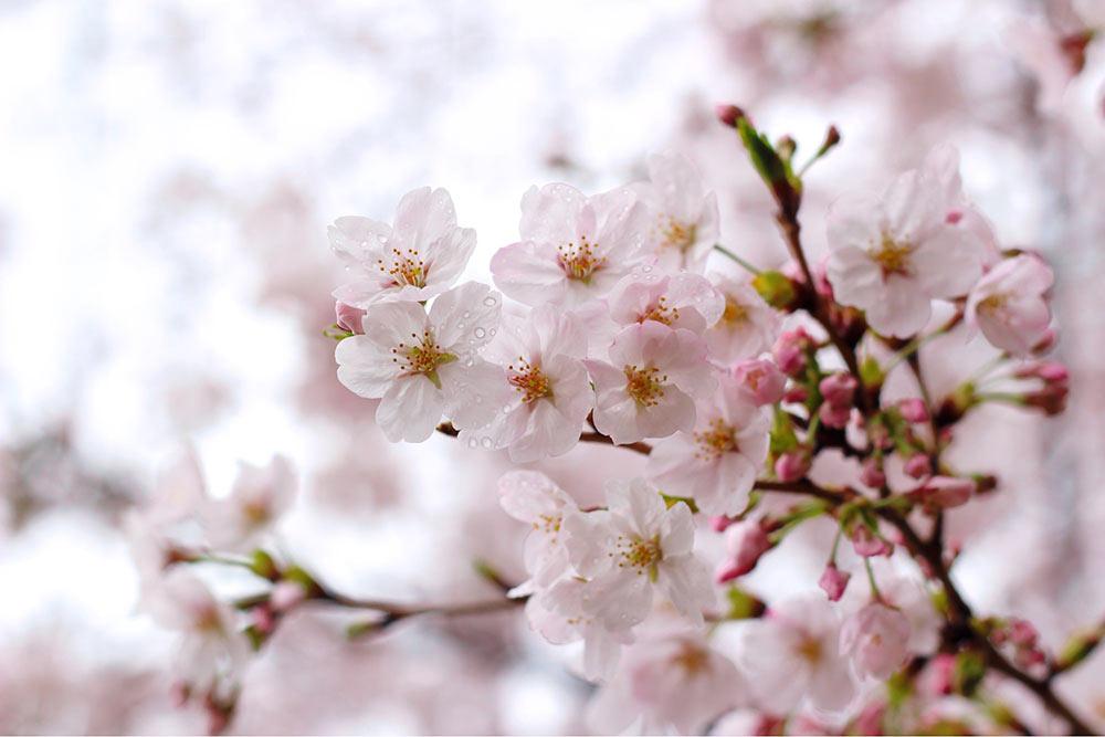 水滴のついた花びら
