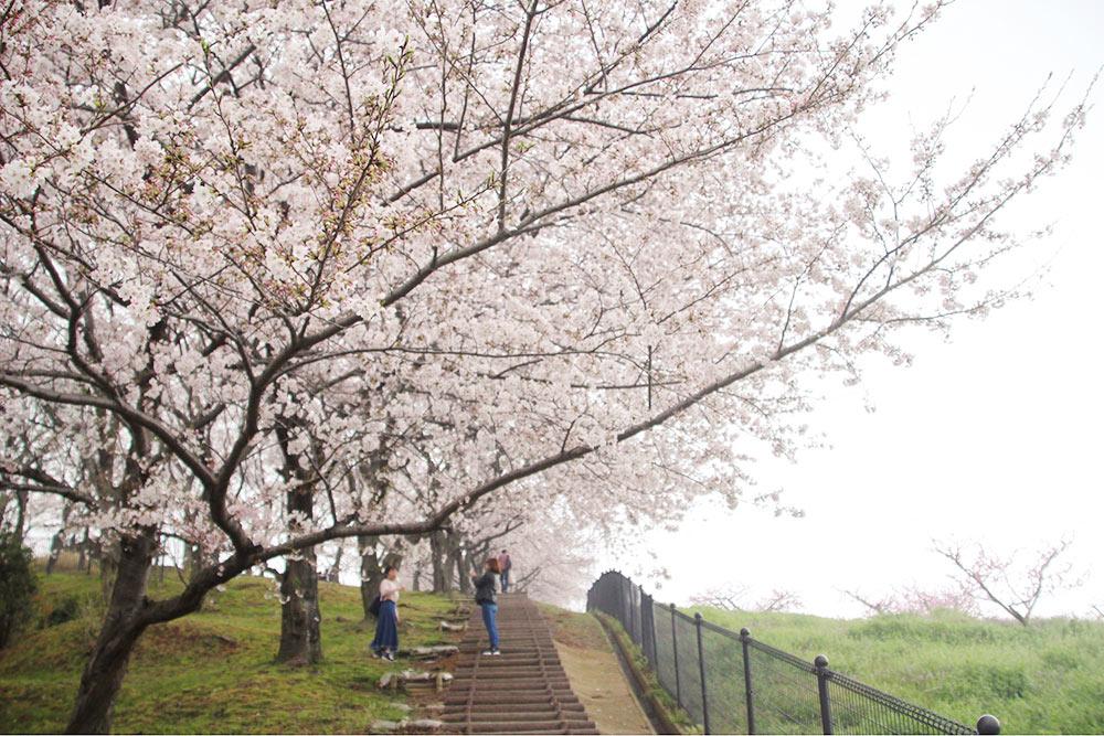 飯山総合運動公園の階段