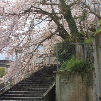 [花見]桜を見るならこんぴらさんの裏参道へ! 大自然の中でツバキ、ツツジ、ボケの花も楽しめます
