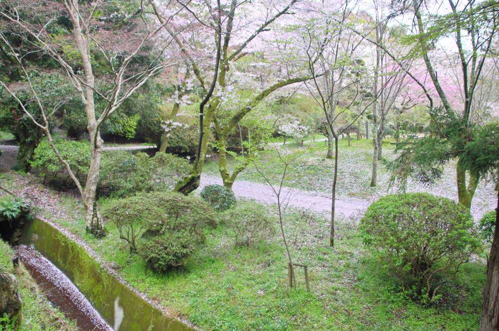 川の向こうにも桜