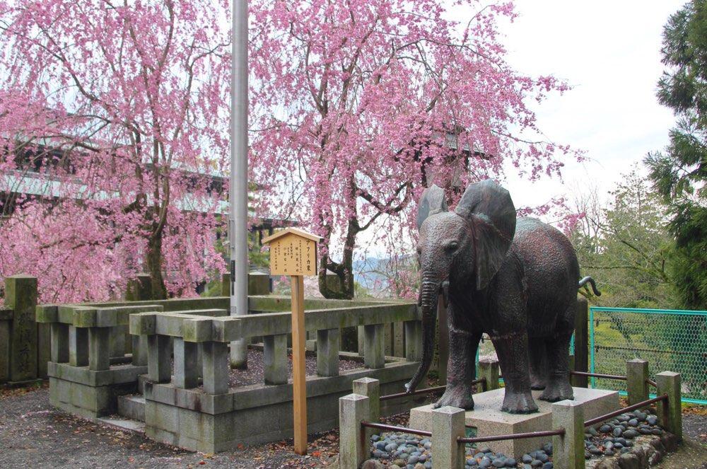 桜の季節には枝垂れ桜がきれい
