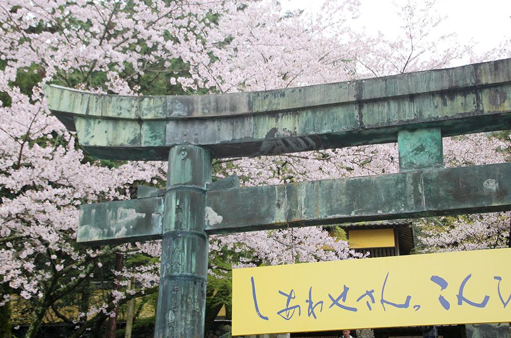 桜馬場西詰銅鳥居と桜