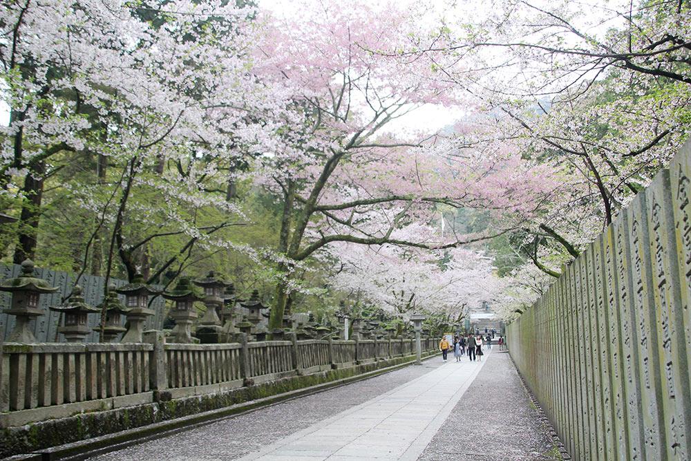 春に桜が咲き乱れる桜馬場