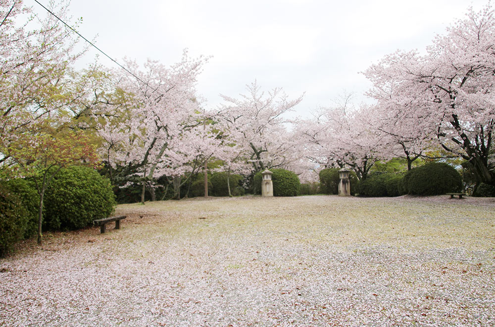 桜の美しい朝日岡