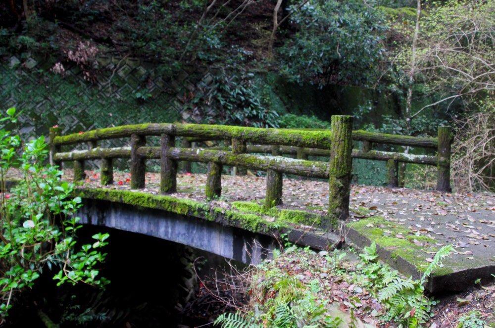ツバキの近くには橋がある
