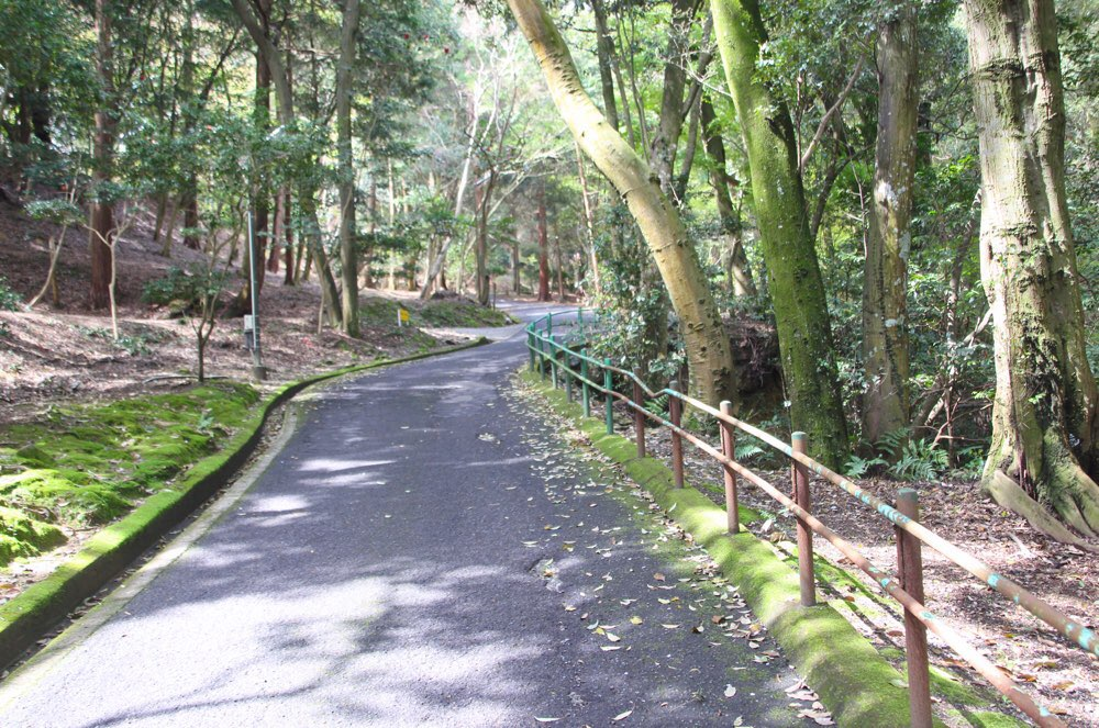 坂道をのぼって431段目まで