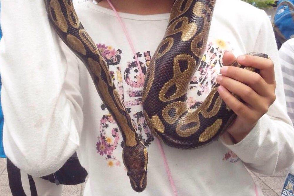 ミニ動物園のニシキヘビ