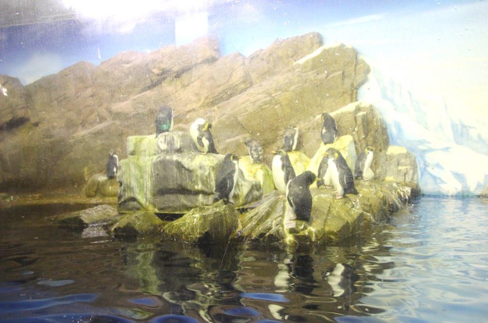 ペンギンたちのエリア