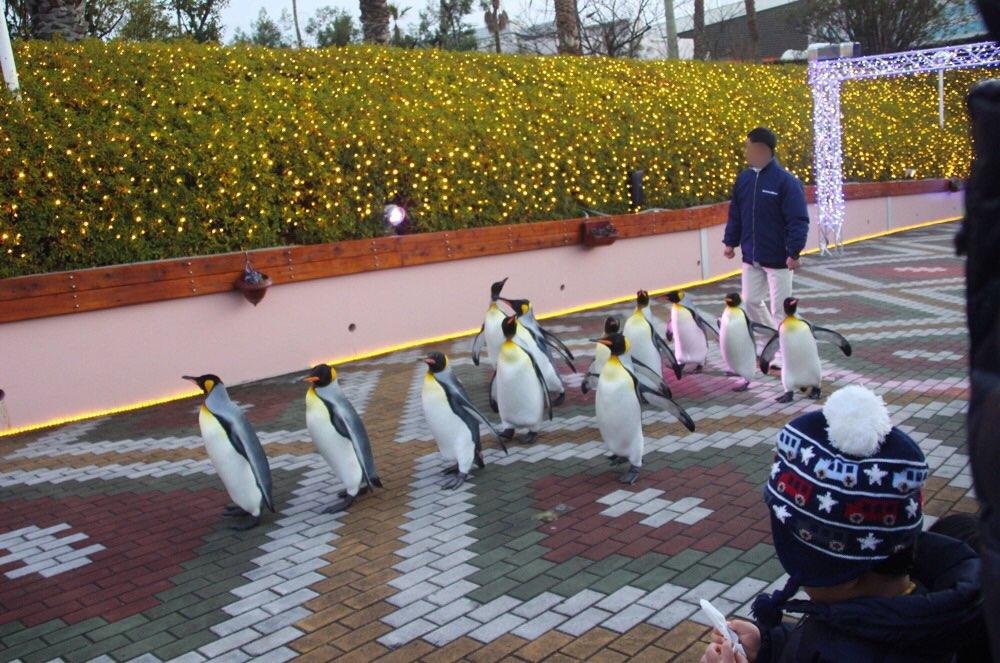 ペンギンがいっぱい