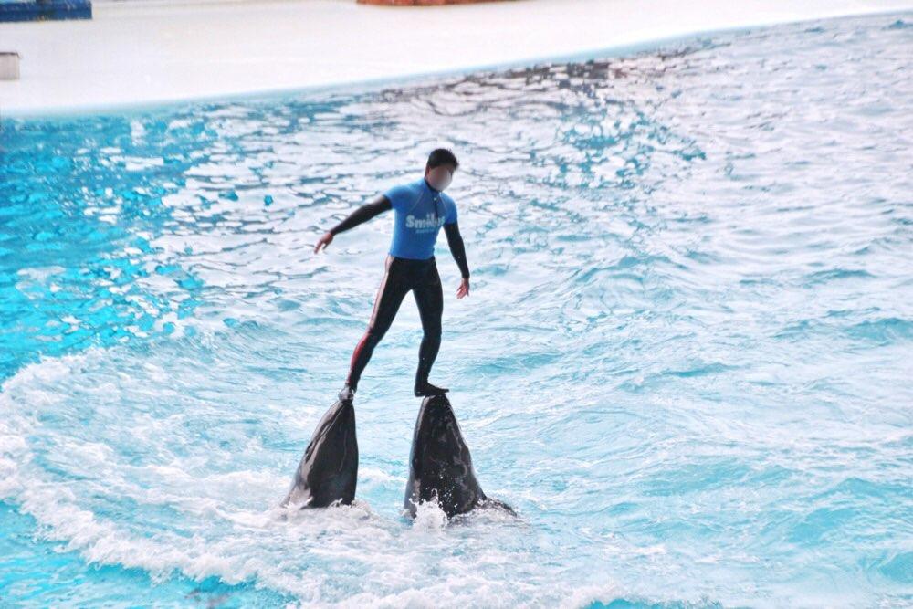 イルカに頭で人間を持ち上げる