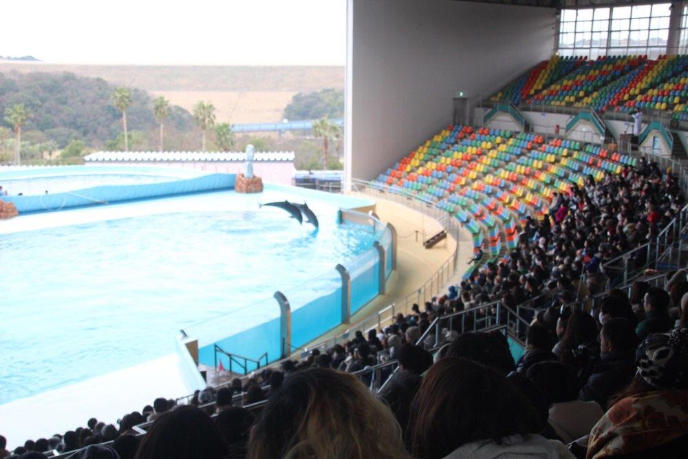 イルカのショーが始まった