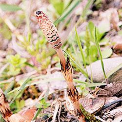 [ 撮影日記 ] 春の写真(野草など)を撮りに行きました 4月2日