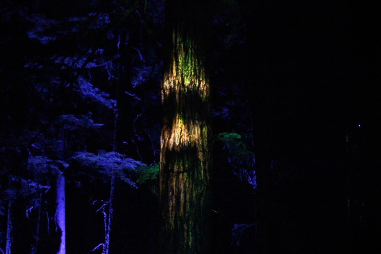 木に顔がある