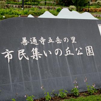 zentsuji-tsudoinooka-park-336